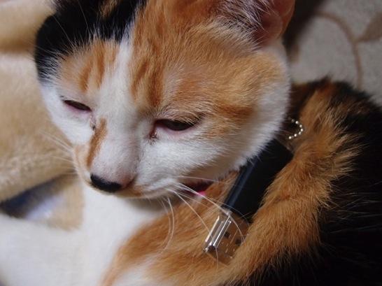 猫へUSBフラッシュメモリ