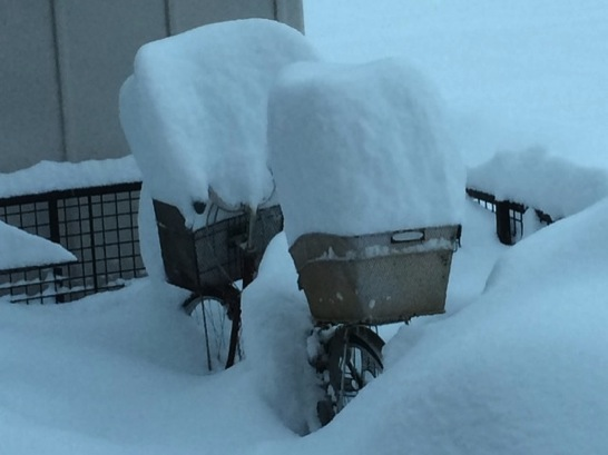 豪雪には農具のテミが安くて効果的かも
