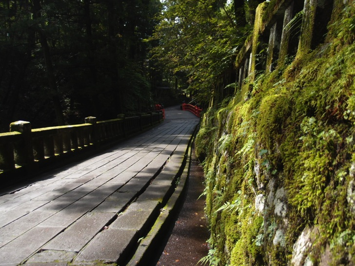 榛名神社の苔