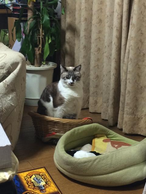 姿勢の良い猫