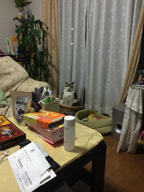 姿勢の良い猫がいると話題