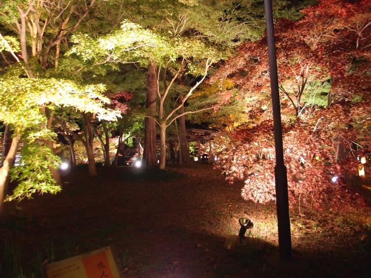 20141122 森林公園紅葉見ナイト