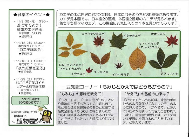 森林公園紅葉ガイド