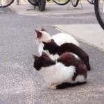 猫好きにはたまらない こんなにいるなんてびっくりしてニヤけてしまう似島の猫と書きたかった