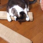 一手間かけて10年持たせる。市販のダンボール製のネコの爪とぎに頑丈さを与える