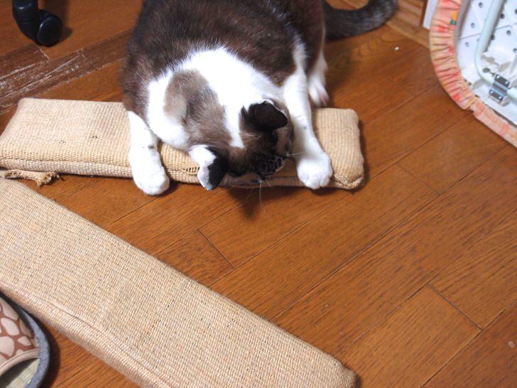 10年使えるネコの爪とぎ
