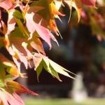 2015年10月末頃の上田城紅葉、あと1周間から10日で完全紅葉だったか。微妙に不足で残念な写真御覧ください