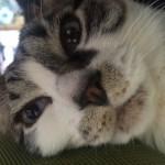 2月22日はネコの日だそうでネコの写真載せてみる