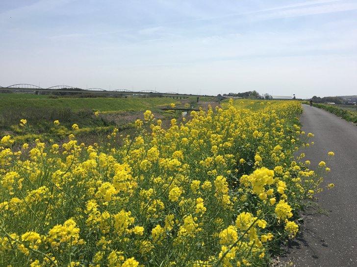 荒川右岸サイクリングロード