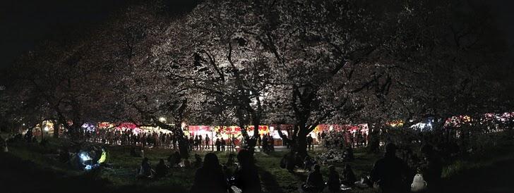 熊谷荒川河川敷桜ライトアップ