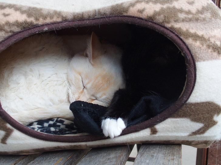 福井県御誕生寺の猫