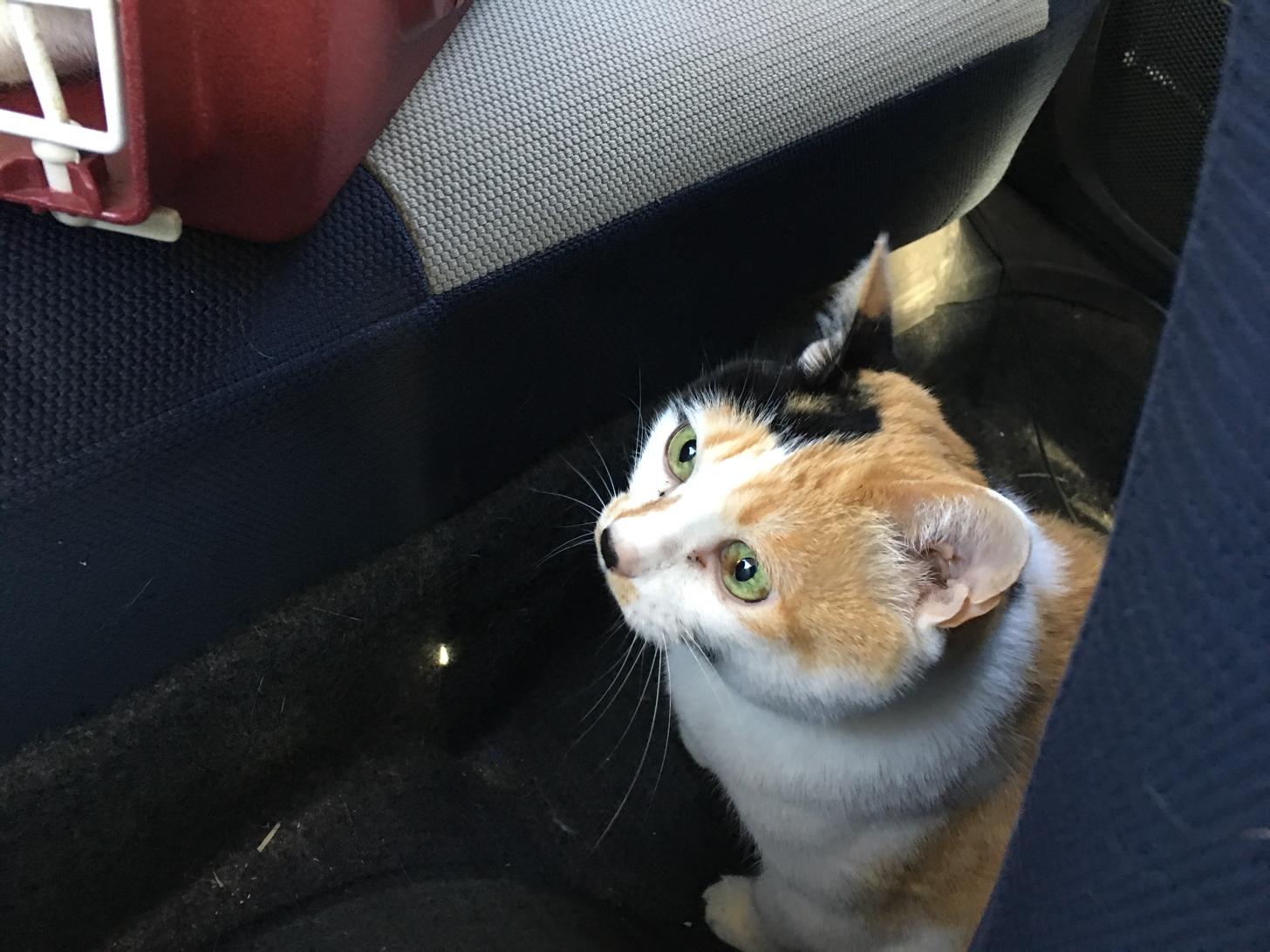 1匹は車内待機