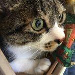 ケージは2個しかないのに猫の定期検診同時3匹敢行