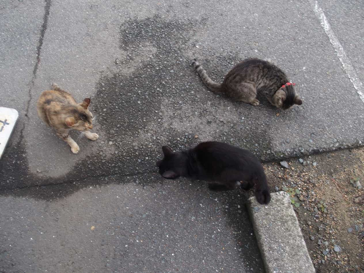 萩城跡の猫