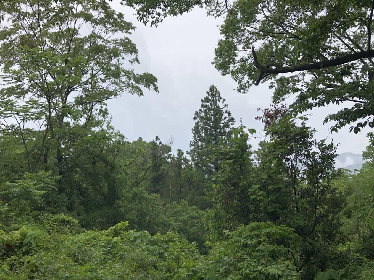 雨の日に高尾山へ登る
