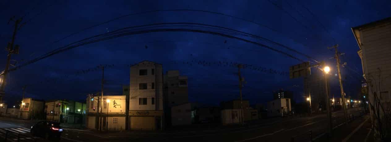 函館市街早朝のカラス
