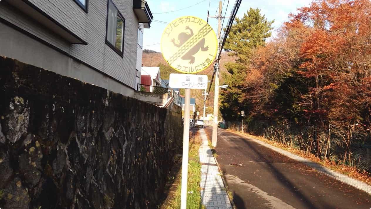 函館山エゾヒキガエル