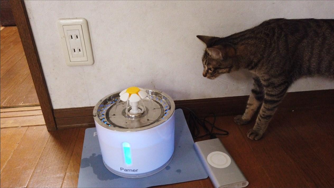 ねこ自動給水器