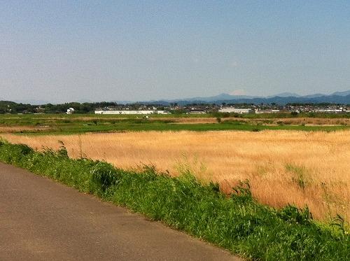 荒川北岸から見える富士山
