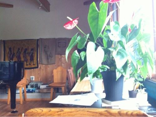 コーヒーショップむじか窓辺の花